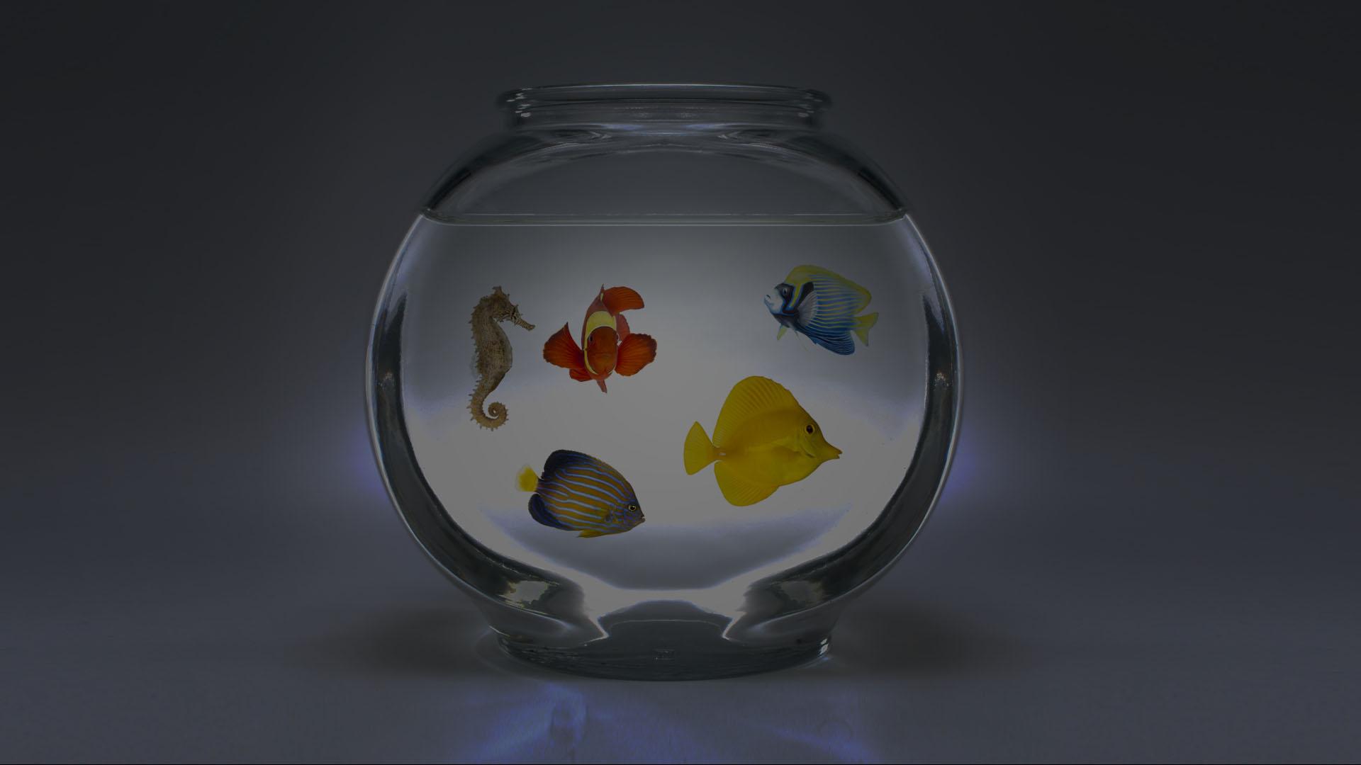 MyFaves Fishbowl